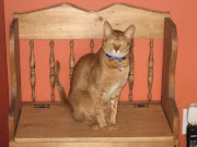 Le chef de la meute: mon petit chat Elvis  :o)