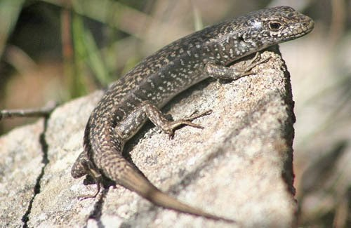 environmental sex determination in reptiles for kids in Manitoba