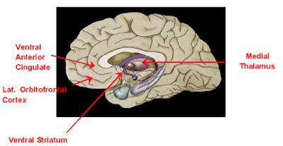frontalcortex