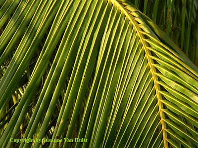 adriana lima palm leaf