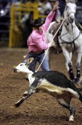 Animal Voice Rodeo A Legalized Abuse Of Animals