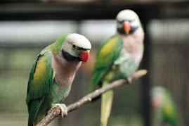 นกยังมีคู่
