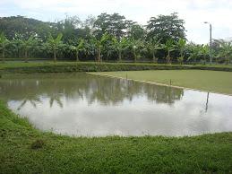 Piscicultura la granja sena tolima construccion de un for Construccion de estanques circulares para tilapia