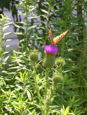 butterfly on purple bloom