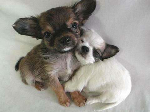 love friend dogs hugging