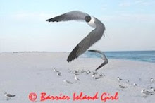 Barrier Island Girl Photos