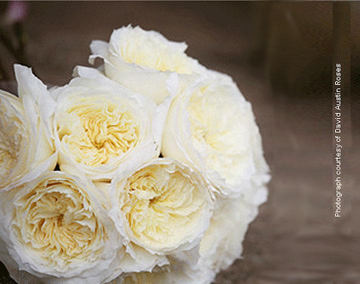 Roses In Garden: David's Diary: Garden Rose Defaults