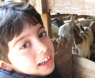 luca e capre