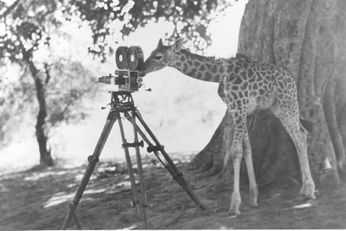 giraffa_gr.jpg (image) :  art