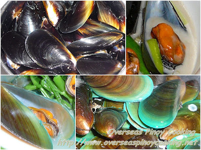 Blue and Green Mussels