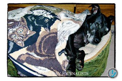 Sacramento Pet Photos