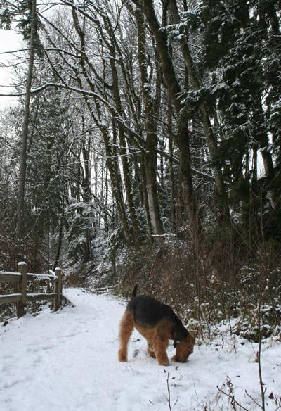 [Snow^_5195.jpg]