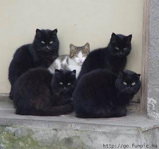 Juego de temas - Página 12 Gatos+negros