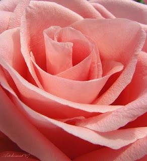 Desde Mi Silla Recorro El Mundo Esta Flor Es Para Mi Prima Silvia