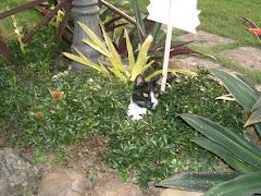 acho que vi um gatinho!