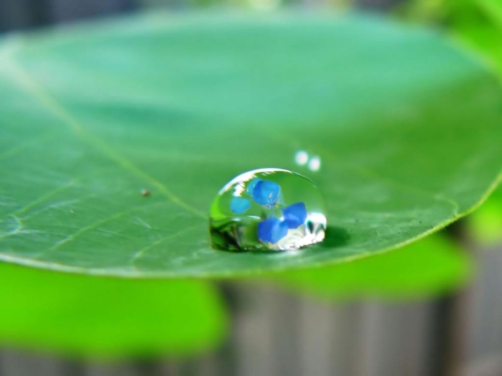 Sad Cute Baby Wallpaper Download Green Leaves Water Drops Wallpapers