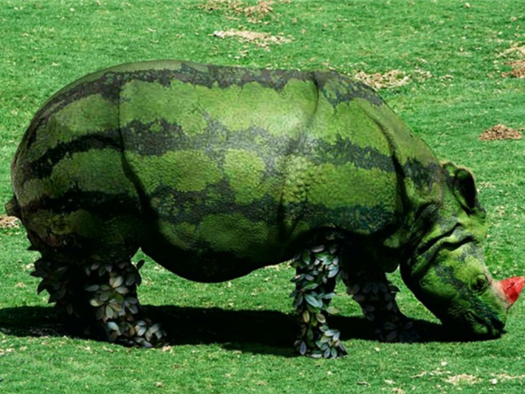 https://1.bp.blogspot.com/_KLJU3hHDGVM/TDhyr5uLNJI/AAAAAAAAC8A/rfL99pbf19s/s1600/Watermelon-Rhino_Creative_Pictures.JPG