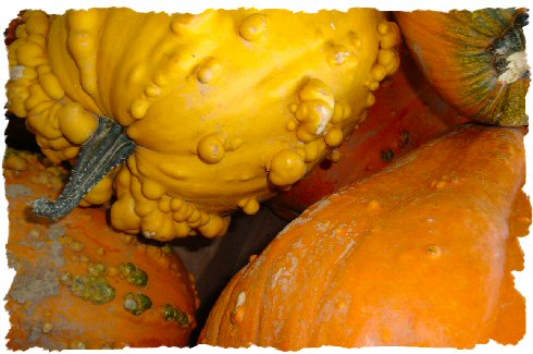 warty gourds photo image