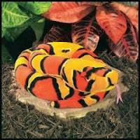 corn snake plush stuffed animal