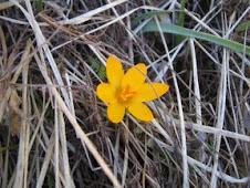 κι ένα λουλούδι