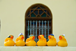 The Mernissi Ducks