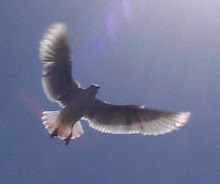 [seagull010.jpg]