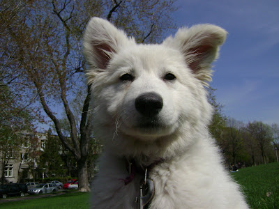 Dog Keeps Shaking Head But Ears Are Clean
