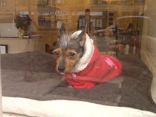 Dog in hair salon window, Chelsea, NY