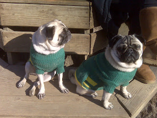 Pugs in matching sweaters, washington square park dog run, nyc