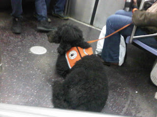 Service dog on the L