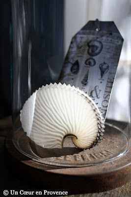 Glass with a shell