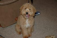 Our puppy Maya