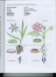 a page from gingers botany coloring book - Botany Coloring Book
