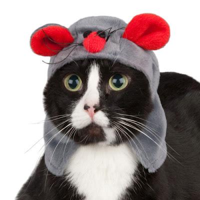 Jak mój kot może schudnąć? - sunela.eu -