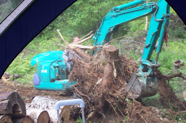 Excavator moving huge tree rootball