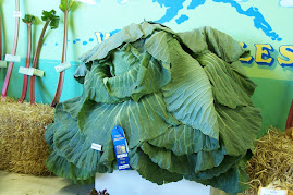 24 pound cabbage at fair