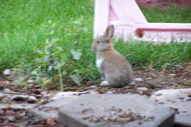 One of the five bunnies