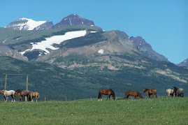 East side horses~Glacier Park mountains