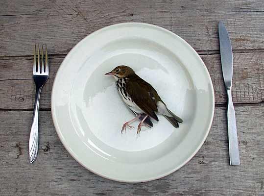 [dead_bird.jpg]