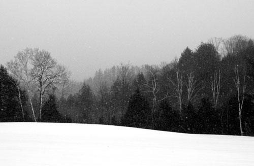 [snowyfielde.jpg]
