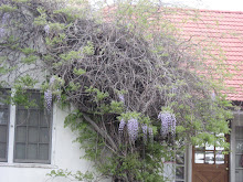WISTERIA WATCH