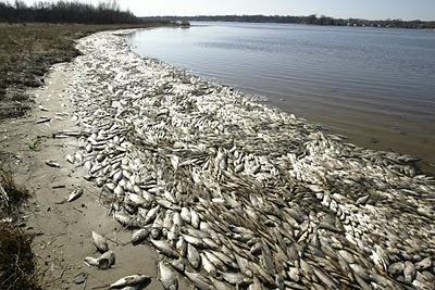 Masiva muerte de peces