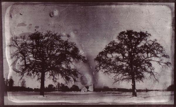 [trees.jpg]