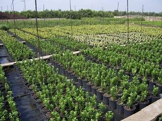 Mundo forestal hoja 2 presentacion individual for Construccion de viveros forestales