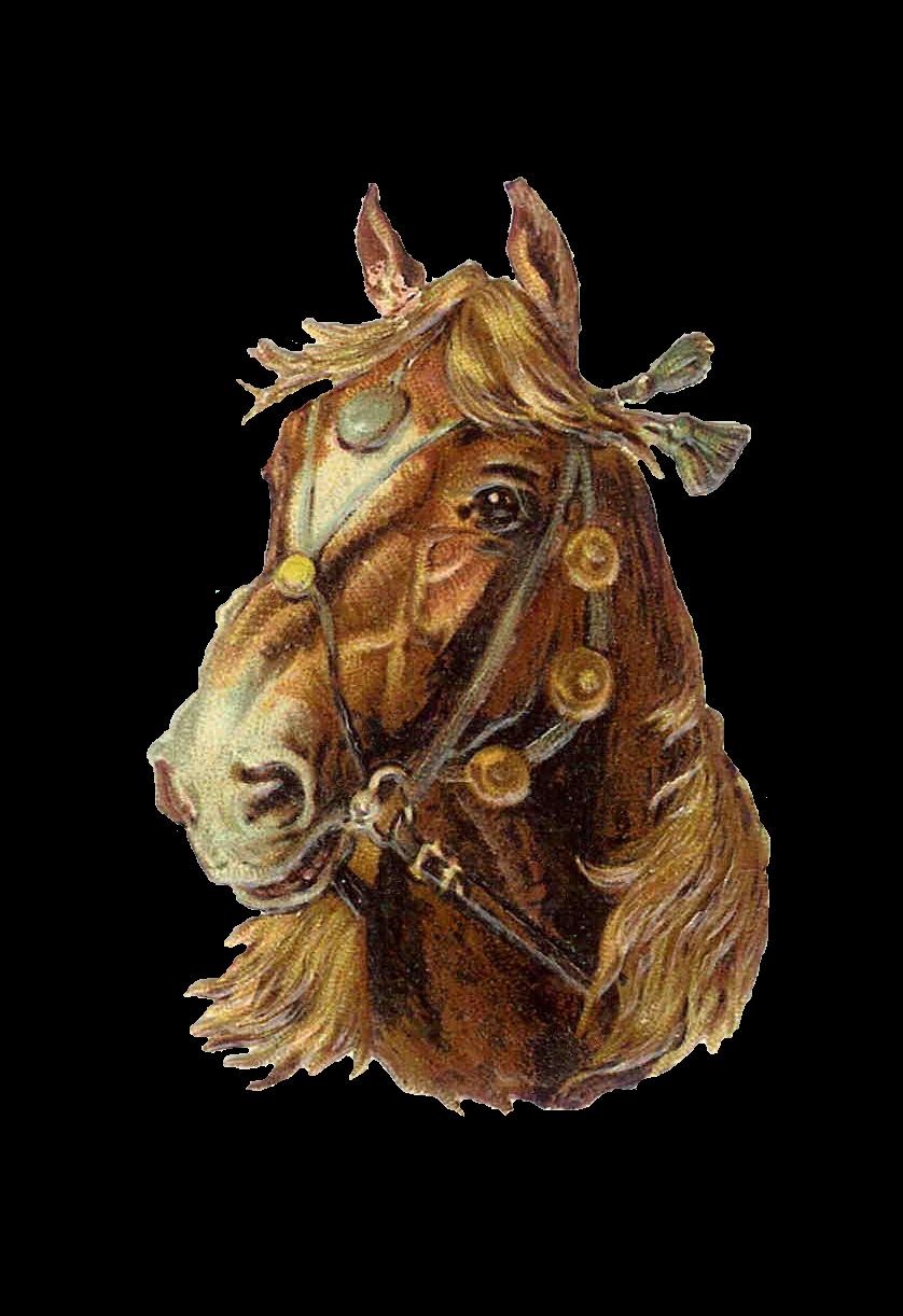horse lovers clip art - photo #18