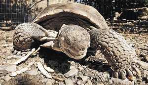 Take that, oh ye enemy of turtles!