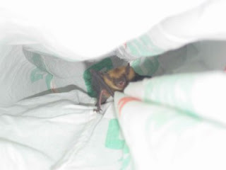 bat climbing up the side of a bag