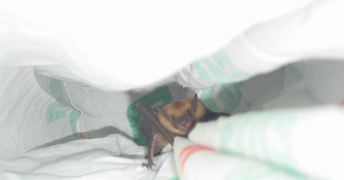 David Scrimshaw 39 S Blog I Think There Is A Bat In My Chimney