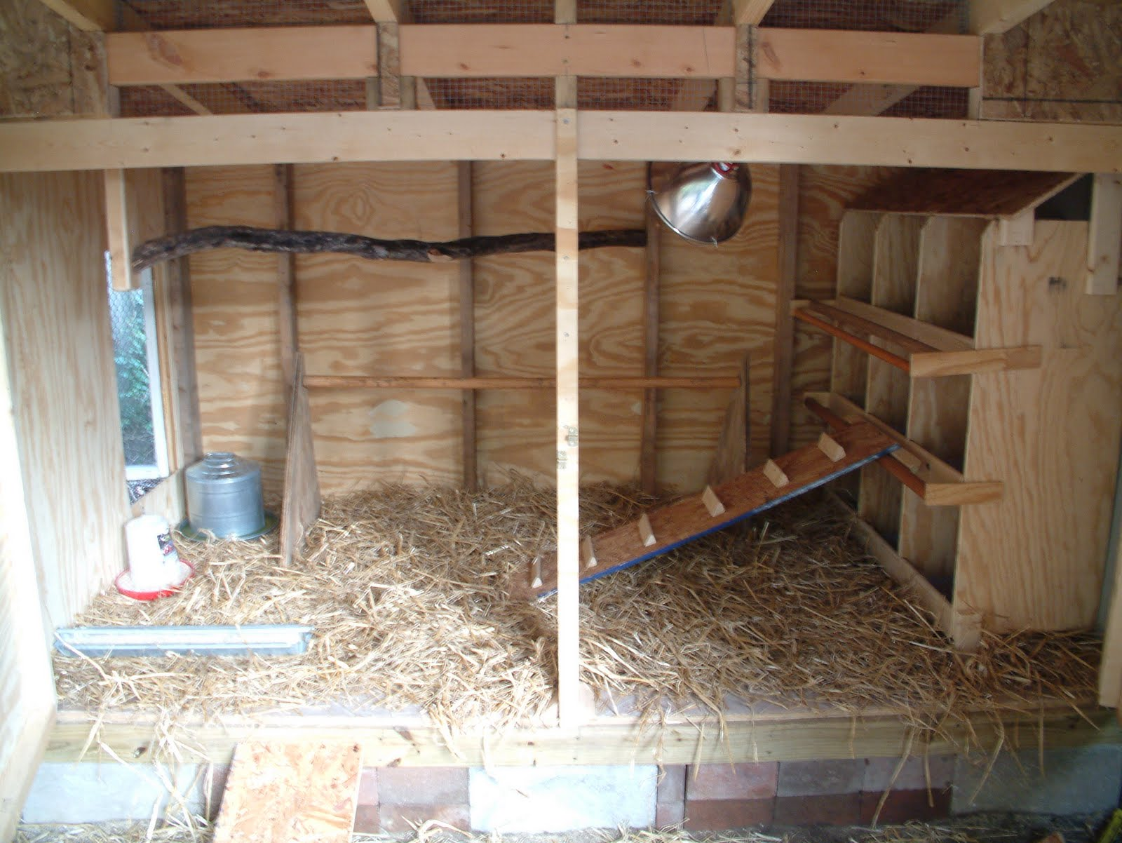 Chicken coop inside layout - photo#46