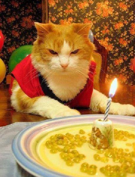 Amusing Pics Cat Happy Birthday